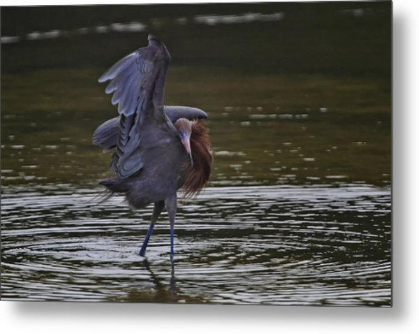 The Canopy Dance Metal Print by Gary Hall