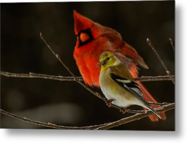 The Cardinal And The Goldfinch Metal Print