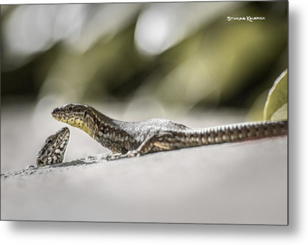 Metal Print featuring the photograph The Charming Lizards by Stwayne Keubrick