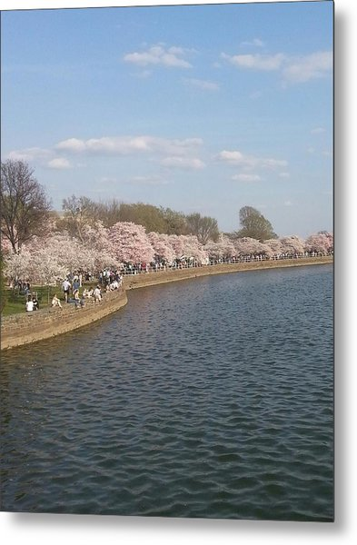 The Cherry Blossom Festival In D.  C Metal Print