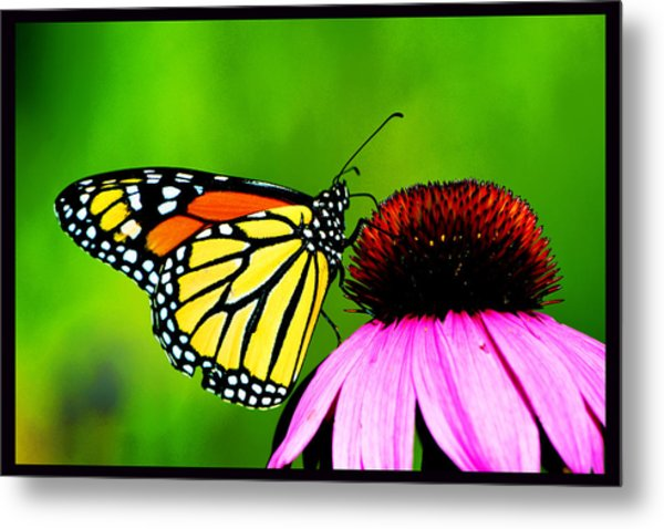 The Clarity Of Morning Light Metal Print