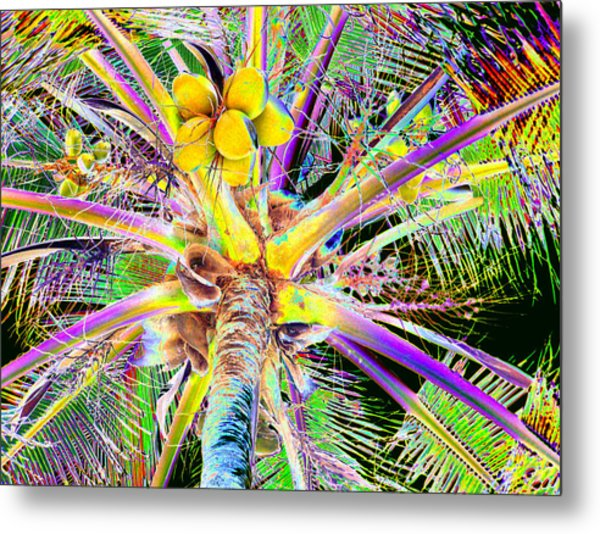 The Coconut Tree Metal Print