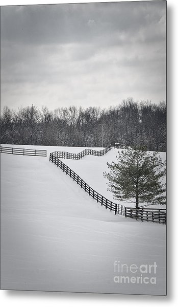 The Color Of Winter - Bw Metal Print