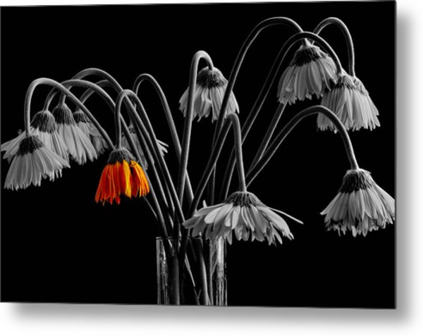 The Colorful One Metal Print