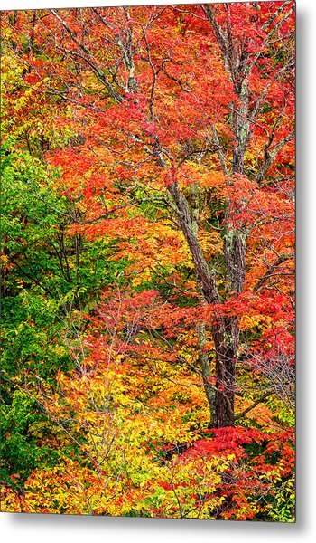 Metal Print featuring the photograph The Colors Of Autumn by Jeff Sinon