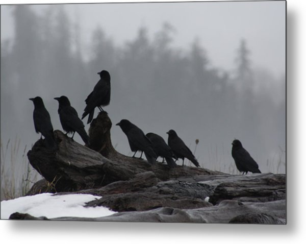 The Corvidae Family  Metal Print