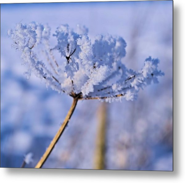 The Crystal Flower Metal Print by Dave Woodbridge