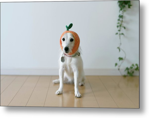 The Cute Dog With A Tangerine Cap Metal Print by Hazelog