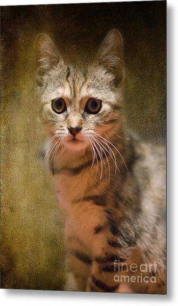 The Cutest Kitty Metal Print