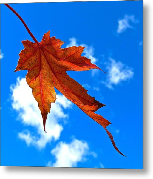 The Dance Of Autumn Metal Print