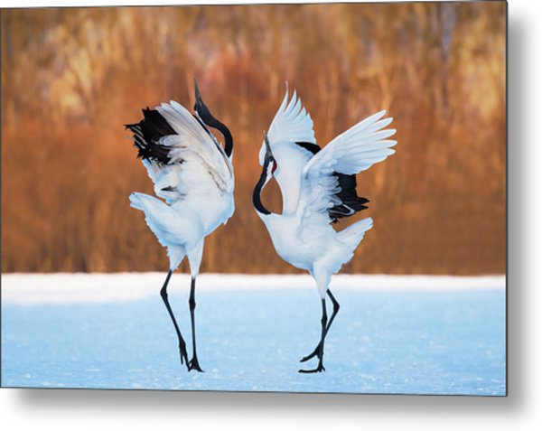 The Dance Of Love Metal Print