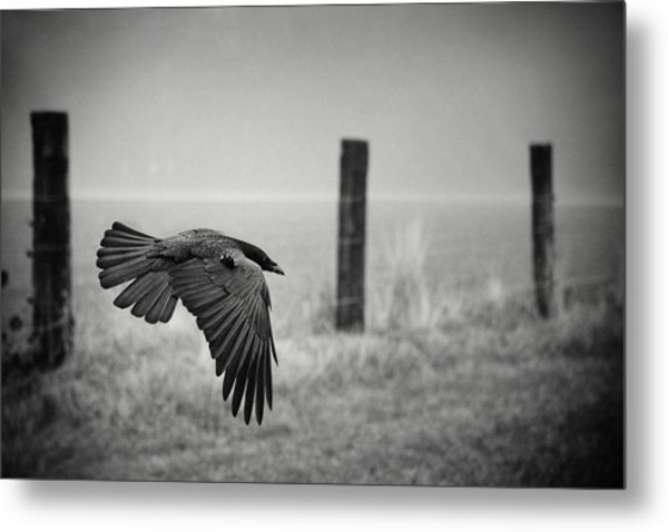 The Day Of The Raven Metal Print