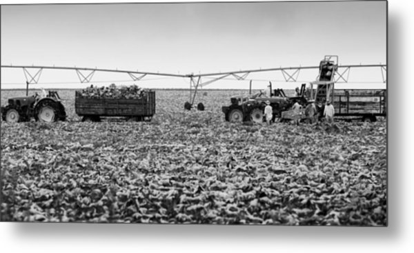 The Day On The Farm Metal Print by Ricky L Jones