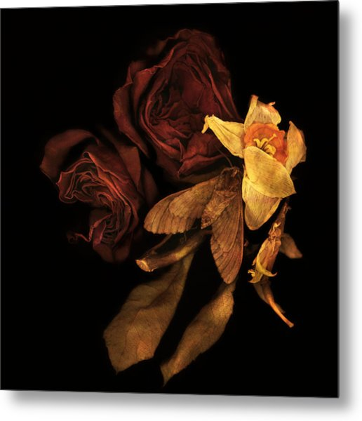 The Dead Moth Metal Print by Peter Ciccariello