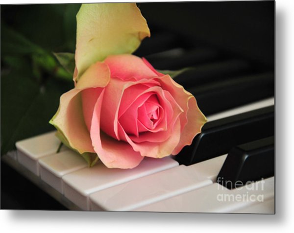 The Delicate Rose Metal Print