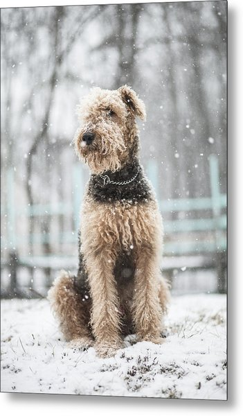 The Dog Under The Snowfall Metal Print