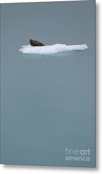 The Drifter Metal Print by Sophie Vigneault