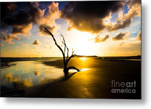 The Driftwood Tree Folly Beach Metal Print