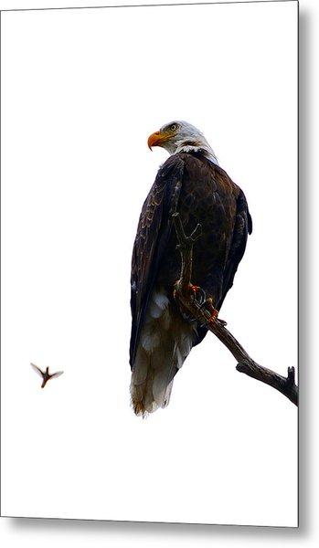 The Eagle And The Hummingbird Metal Print