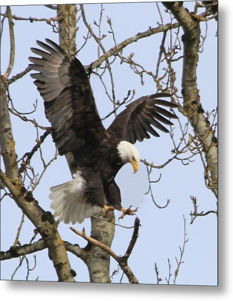 The Eagle Is Landing Metal Print
