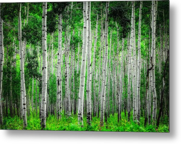 My Own Emerald Forest Metal Print