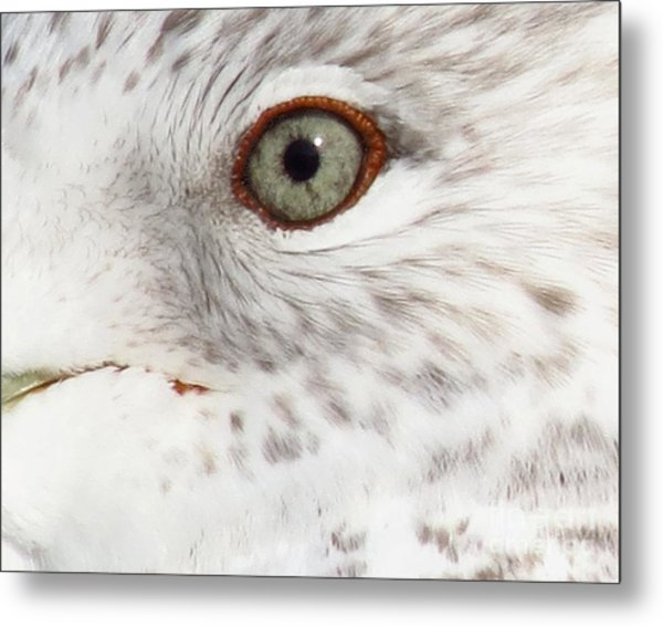 The Eye Of The Gull Metal Print