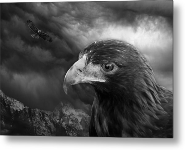 The Eyes Of The Hawk Metal Print
