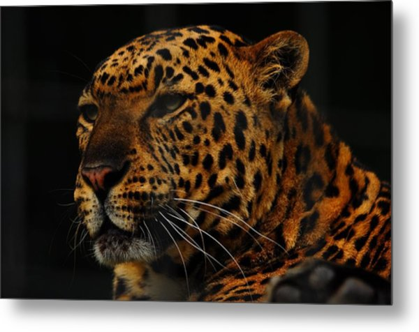 The Face Of A Leopard Metal Print by Valarie Davis