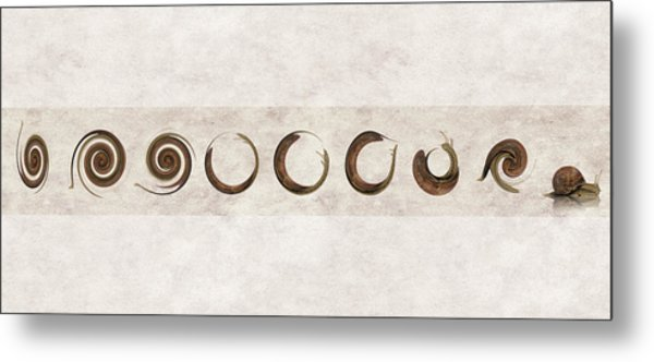 The Failed Evolutionary Spin Cycles Of The Snail Metal Print