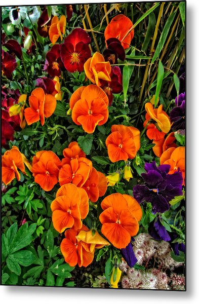 The Fall Pansies Metal Print