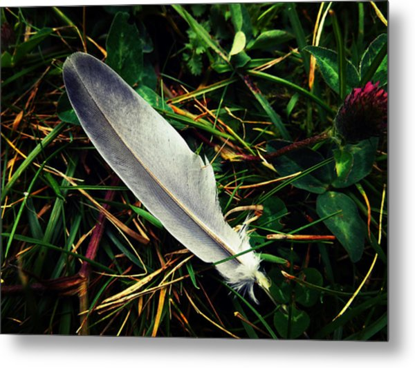 The Fallen Feather Metal Print
