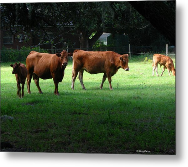The Farm Metal Print by Greg Patzer