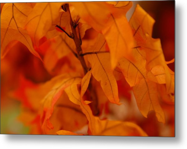 The Fire Within Metal Print by Michael Glenn
