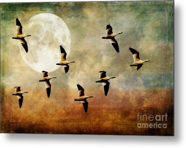 Metal Print featuring the photograph The Flight Of The Snow Geese by Lois Bryan
