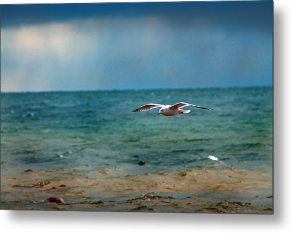 The Flight Metal Print by Rhonda Humphreys
