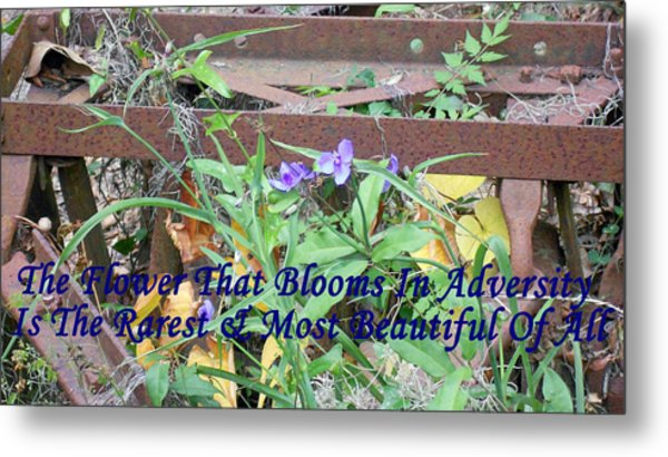 The Flower That Blooms In Adversity  Metal Print