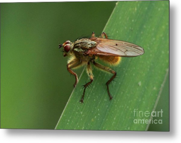 The Fly ? Metal Print