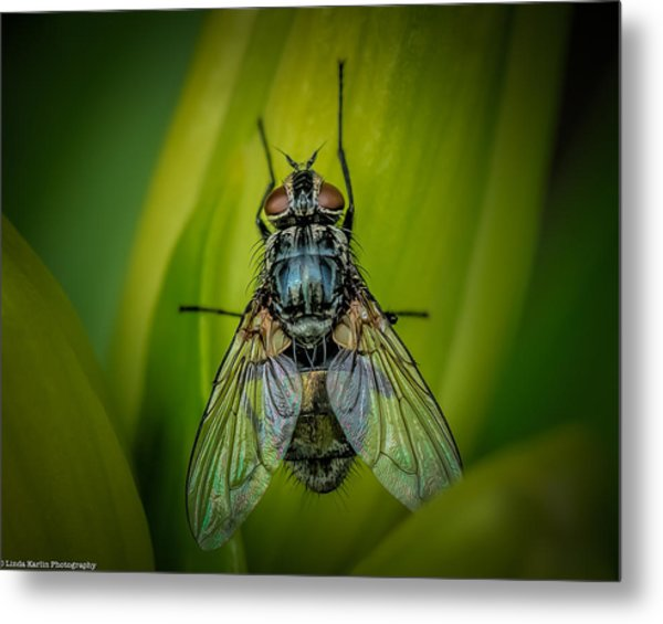 The Fly Metal Print