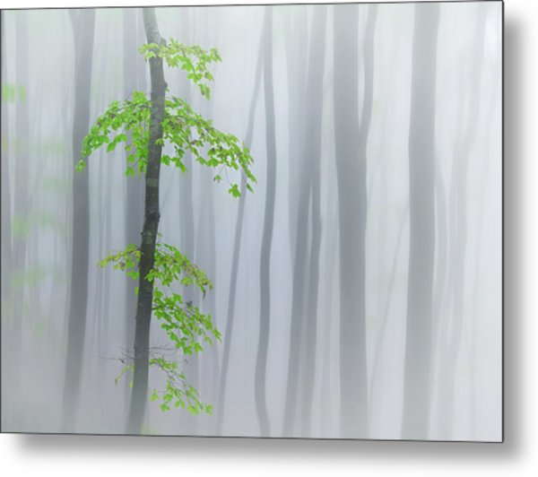 The Fog And Leaves Metal Print by Michel Manzoni