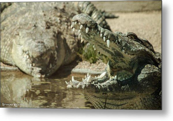 Metal Print featuring the photograph The Fool Crocodile by Stwayne Keubrick