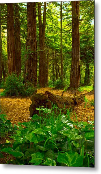 The Forest Of Golden Gate Park Metal Print