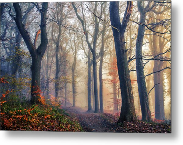 The Forest Path. Metal Print
