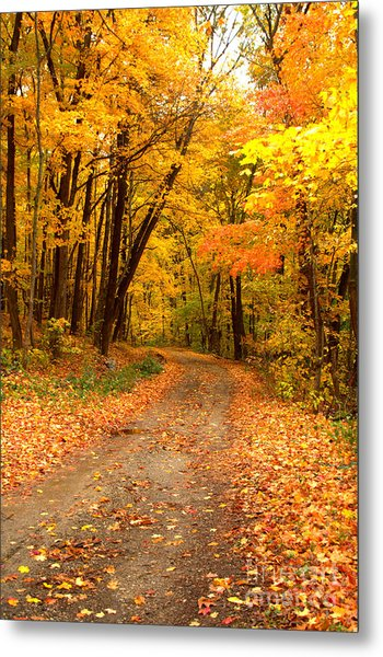 The Forest Road Metal Print