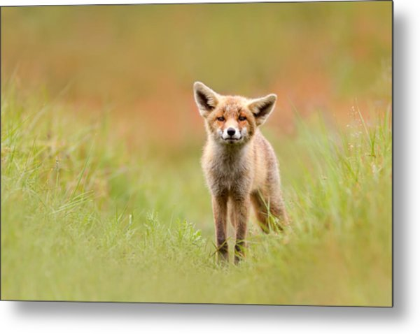 The Funny Fox Kit Metal Print