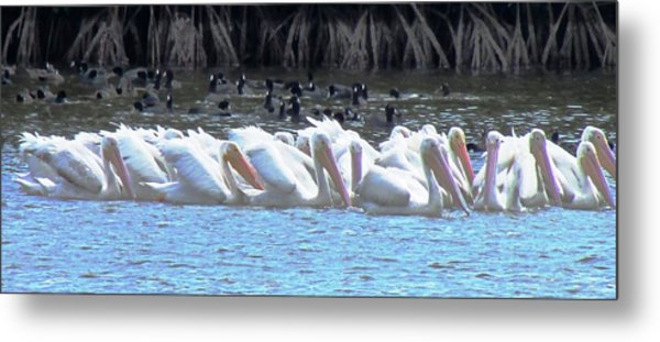 The Gathering Metal Print by Will Boutin Photos