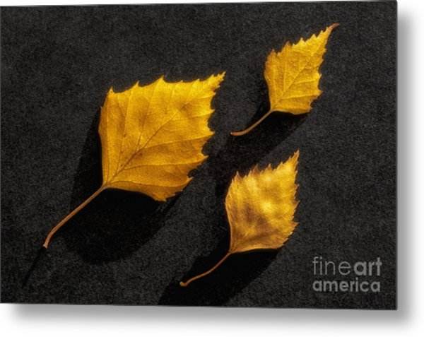 The Golden Leaves Metal Print