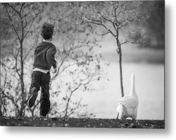 Metal Print featuring the photograph The Goose Chase by Priya Ghose