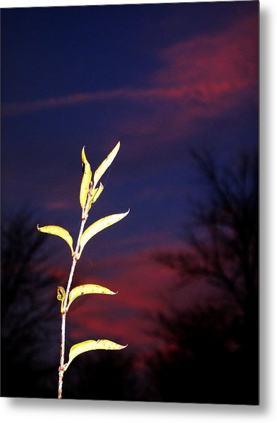 The Greenhorn Metal Print