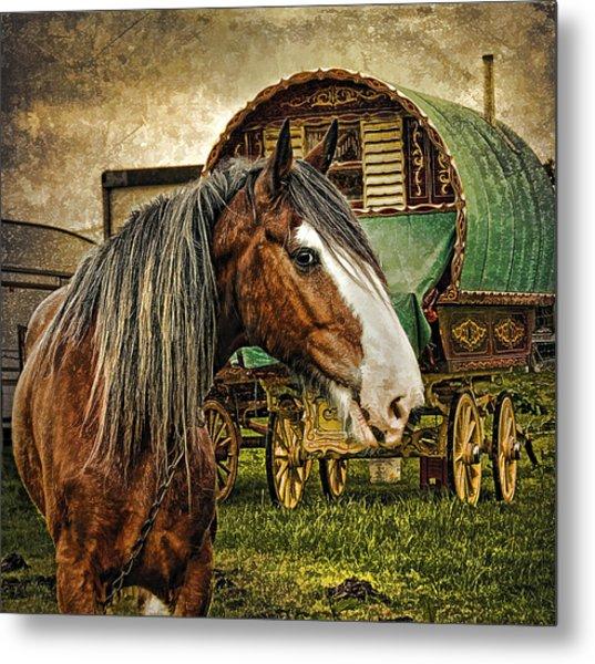 The Gypsy Vanner Metal Print