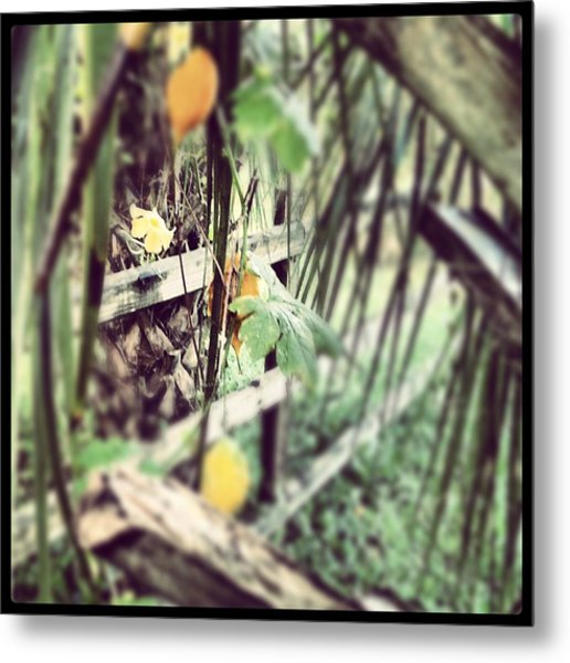 The Hidden Fence Metal Print by Chasity Johnson